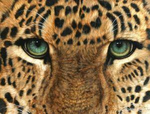 Jacquie Vaux leopard_eyes